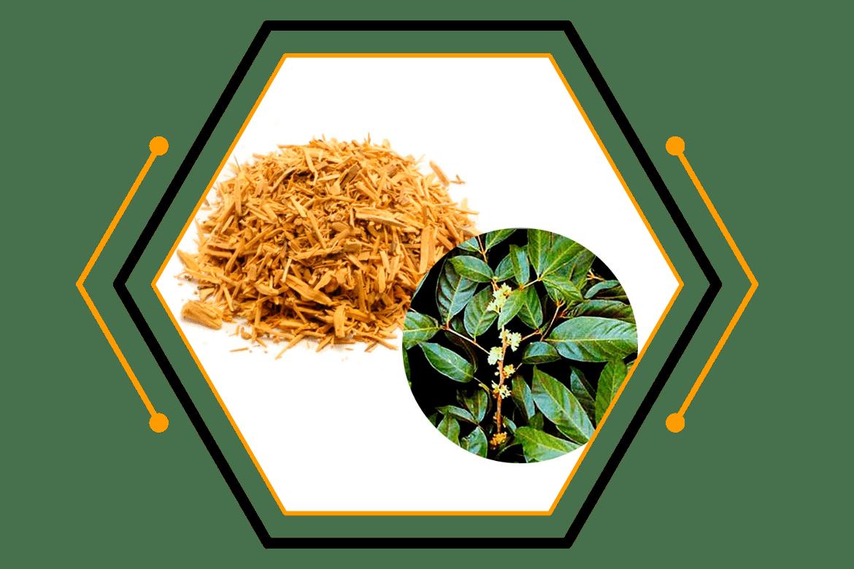 Muira-Pauma-Bark-Extract